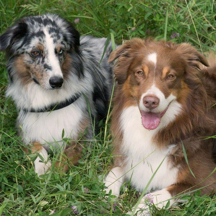hundetherapie-muenchen-ergotherapie